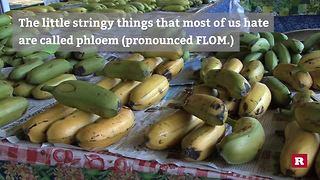 7 Banana Facts To Snack On Today - Video