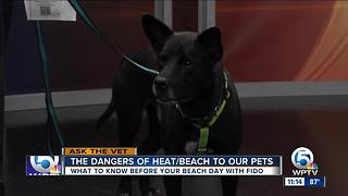 Dog dangers at the beach - Video