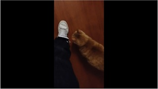 Cat follows owner's every single move - Video