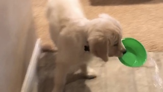 Clumsy Adorable Puppy Makes A Big Wet Mess