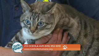 Nashville Humane Association 7/7/17 - Video