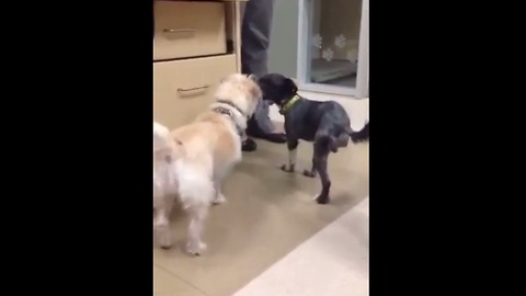 Three legged rescue dog befriends tripod puppy