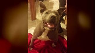 Deputy shoots and kills a Pahrump family's dog on residential alarm call - Video