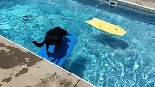 Clever dog uses bodyboard to cross pool - Video