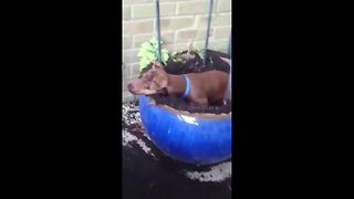 Puppy digging up flowerpot instantly freezes when owner catches him