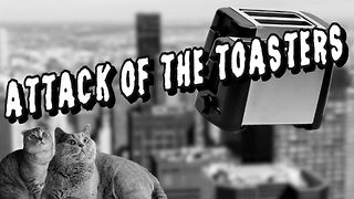 Cats Face The Attack Of The Toasters - Video