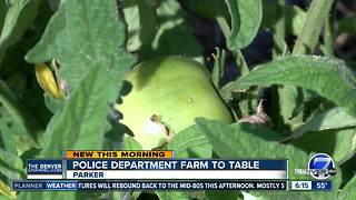 Parker Police garden donates produce to local food pantry - Video