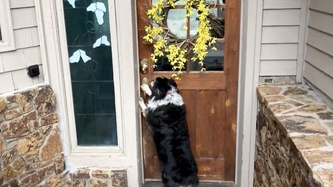 Man's best friend: Dog opens and closes door for owner