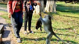 Seller Catching Baby Monkey, Father Monkey Come To Fighting