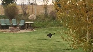 Funny Cat Dances With A Leaf - Video