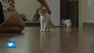 Yoga class features cats in need of homes - Video