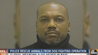 Baltimore Police rescue pitbulls from alleged dog fighting operation - Video