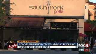 Roaches Amid Health Code Violations at Restaurant - Video
