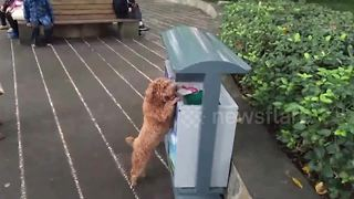 Eco-conscious dog collects rubbish on street in southwestern China - Video