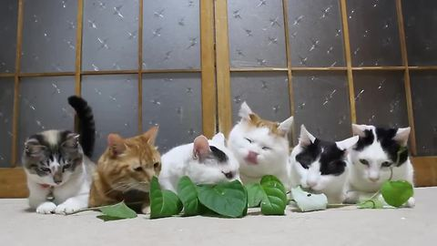 Cats snacking on leaves are hypnotizing to watch