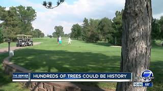 Neighbors fight to save trees ahead of trial involving Denver's City Park Golf Course - Video