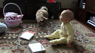 Baby and Chihuahua play with bubbles for the first time - Video