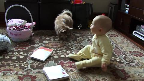Baby and Chihuahua play with bubbles for the first time