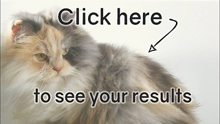 Cat Quiz: Poor Score