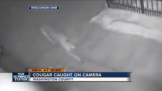 VIDEO: Cougar spotted in Washington County - Video