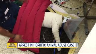 Arrest made after FL dog is found stabbed, beaten, stuffed in suitcase - Video
