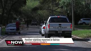 Deputies call off search for panther in Valrico after resident reports sighting - Video
