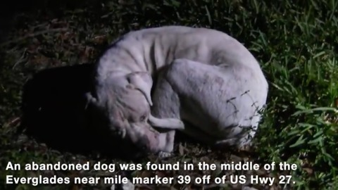 Hopeless dog found abandoned in Florida Everglades