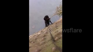 Passerby rescues two dogs trapped in cold river - Video