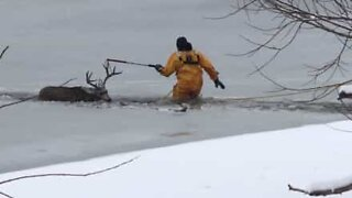 Deer rescused from frozen lake in Colorado