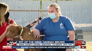 Pet of the Week: Hannah Brown