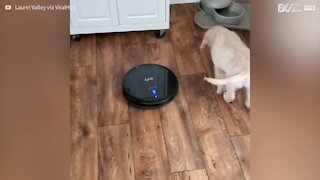 Puppy gets in a spin hitching a ride on smart vacuum cleaner