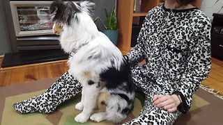 Australian Shepherd Does a Doggy Trust Fall - Video
