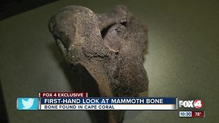 First hand look at mammoth bone in Cape Coral