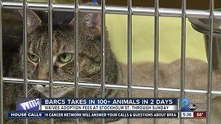 BARCS waiving adoption fees through Sunday due to overcrowding