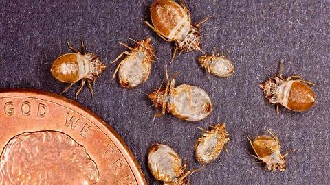 How to Prevent and Control a Bed Bug Infestation | Health and Nutrition Channel