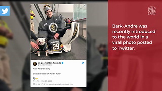 Vegas Golden Knights Post Viral Photo Of Star Goaltender with 'Bark-Andre Fleury' - Video