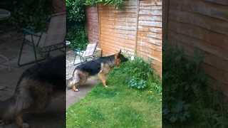 Puppy Investigates Garden Intruder - Video
