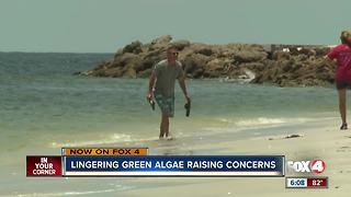 Can algae blooms harm human health?