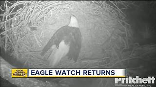Eagle Cam begins 'Hatch Watch' on pair of eggs - Video