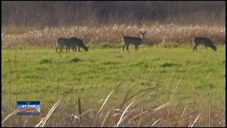 Minimum hunting age removed - Video
