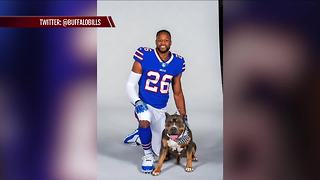 Buffalo Bills players pose with their furry friends - Video