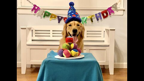 Golden Retriever overjoyed at birthday cake made of tennis balls