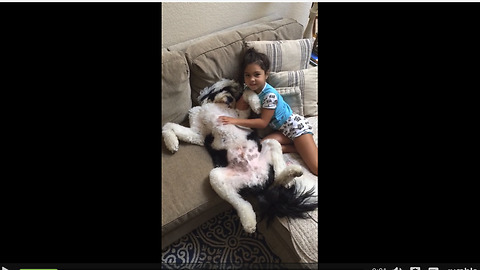 Divine Belly Rubs Send Relaxed Dog Into The State Of Nirvana