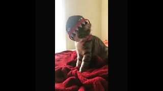 Festive kitten shows off Halloween costume - Video