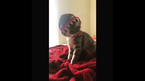 Festive kitten shows off Halloween costume