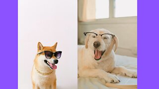 Cute Puppies - Cute Funny and Smart Dogs Compilation