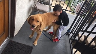 Kid loves Golden Retriever!!  - Video