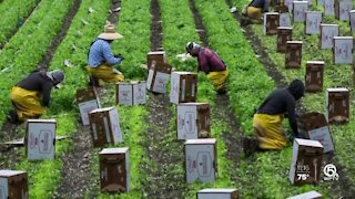 Hispanic advocates want to get more immigrant farmworkers vaccinated
