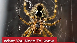 What you need to know about brown recluse spider bites because they're on the rise