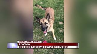 Livonia family demands answers after utility worker shoots, kills dog - Video